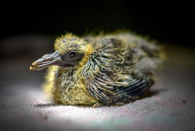 Vorig jaar ving het vogelopvangcentrum net geen 4.000 dieren op.© gf