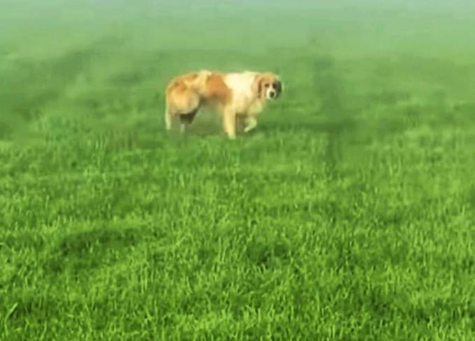 Het dier werd voor het laatst gezien in Waregem.© gf