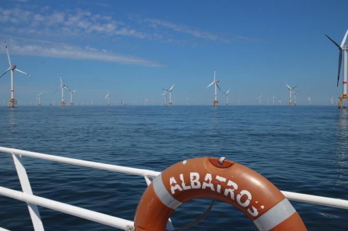 De windmolenparken voor onze kust gaan gepaard met meer leven in zee.© HH