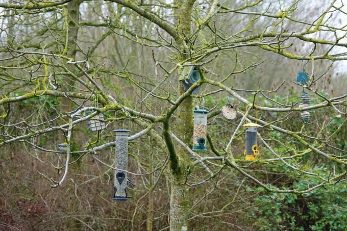 Enkele mezen doen zicht te goed aan de vele verschillende soorten voedsel die Trees voor hen ophangt.© AN