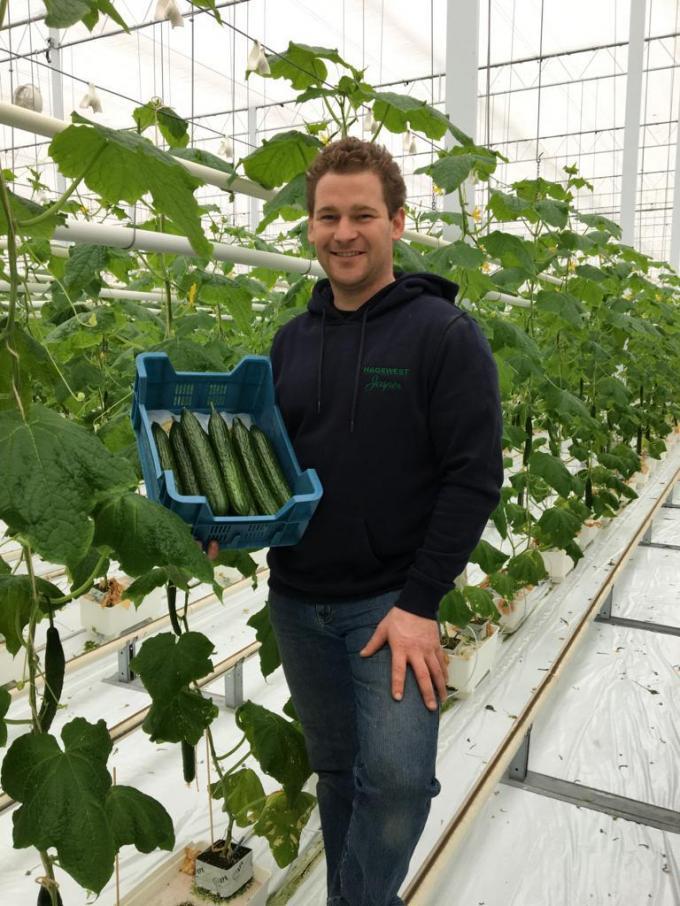 Komkommerteler Jasper Haghedooren bood 242 EPS-T kistjes aan met komkommers van de variëteit Proloog.