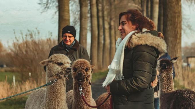 Je kan met de alpaca's mooie natuurgebieden verkennen.© SR