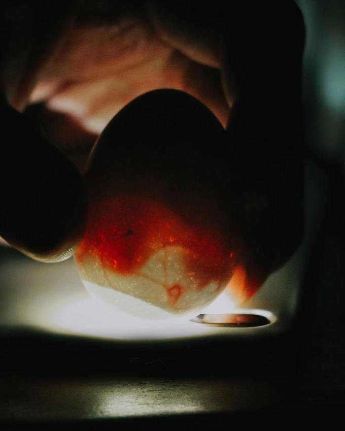 Het schouwen van de eitjes - om te zien of ze al dan niet bevrucht zijn - leverde tijdens een livestream op Instagram al honderden kijkers op. (Foto Instagram Angelo Dorny)