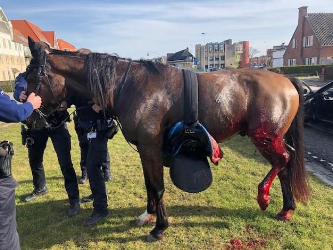 Het paard had ernstige verwondingen aan zijn poten.© GF
