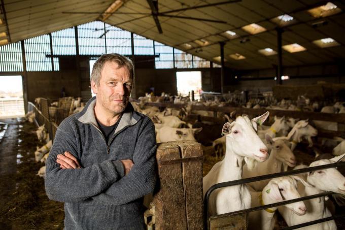 Renaat Devreese in zijn stal. Tien jaar heeft hij nodig gehad om zijn bedrijf erbovenop te krijgen. (foto Davy Coghe)©Davy Coghe Davy Coghe