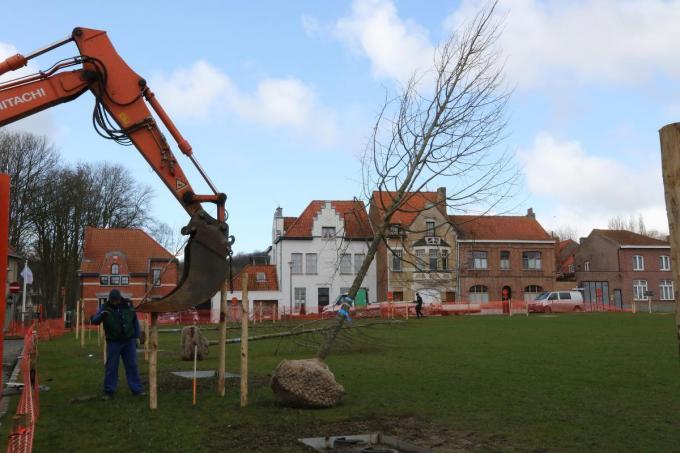 vandaag werden de bomen op de Dries te Kemmel geplaatst©Eric Flamand Regional