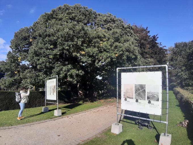 Wie een bezoekje brengt aan de Vierstammige Overlever, kan een QR-code scannen. Dan komt de boom eigenlijk een beetje tot leven en vertelt ze zelf haar verhaal.© (Foto TOGH)