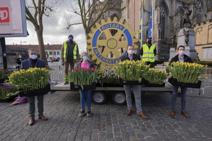 In Poperinge beslisten ze om de tulpenplukactie coronaproof te laten doorgaan.© foto MD