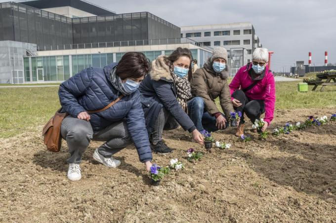Zo'n 200 medewerkers deden de wandeling, ze plantten allemaal een bloemetje. Vanuit Intensieve Zorg heb je zicht op het perkje.©STEFAAN BEEL Stefaan Beel