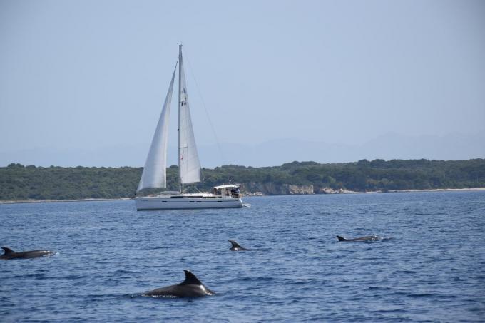 Dolfijnen kijken voor de kust van Lošinj. Een absolute must.© Peter Soete