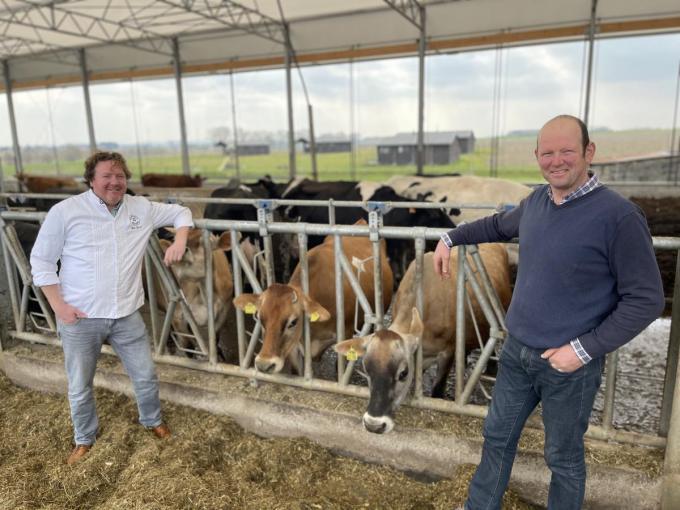 Chef Bert Recour (links) en Filip Louwagie bij de koeien van boerderij Den Overdraght.© TP