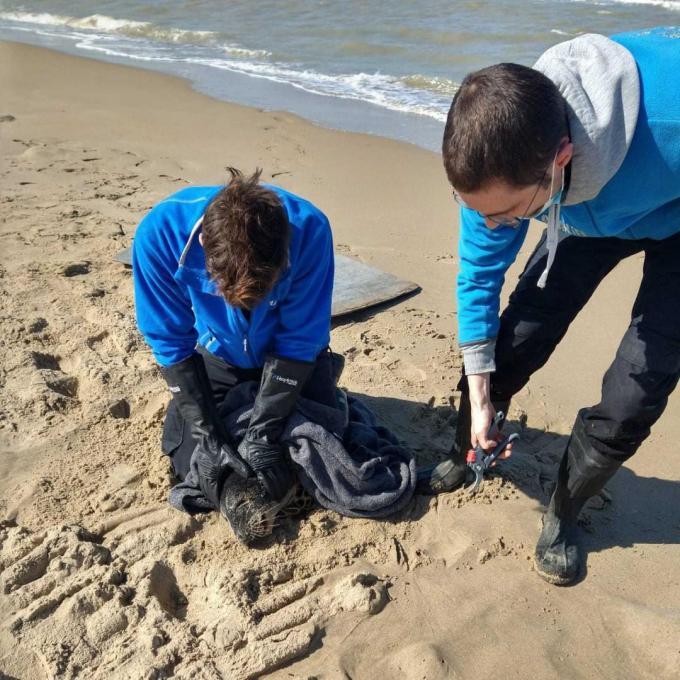 Het zeehondje werd nog op tijd gered en het kon weer de zee in.© GF