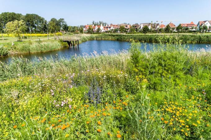 De bloemenweide van Wulpenhoek is de Europese nummer 1 op vlak van plantendiversiteit.© DM