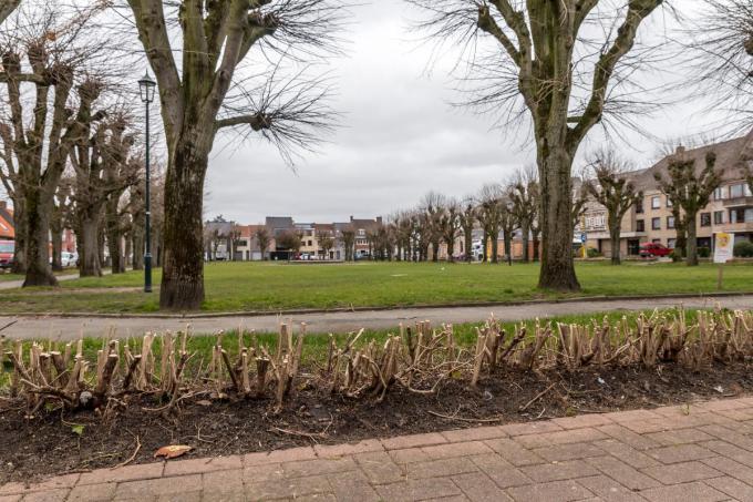 De haag op het Hulstplein wordt in de toekomst weer groen.©Wouter Meeus foto WME