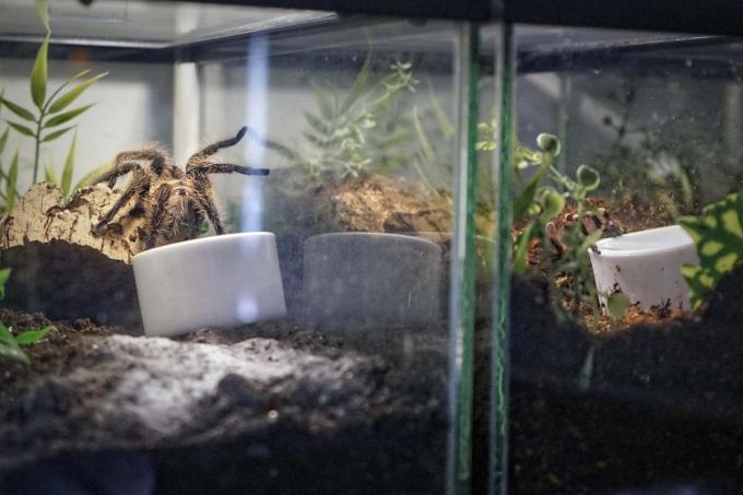 Elke spin heeft een eigen terrarium.© CLL
