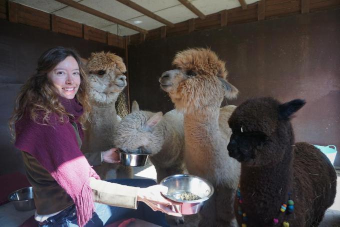 Kim wil via Alpaca Atelier haar liefde voor en kennis over alpaca's graag delen.© TVA