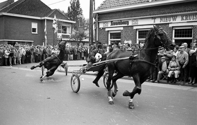 Deze taferelen schudden Gaia wakker en leidden uiteindelijk tot een verbod voor paardenkoersen op de weg.© Stefaan Beel