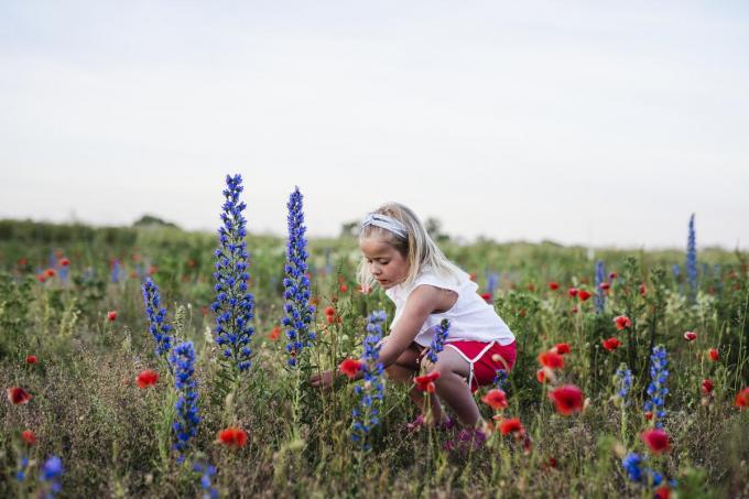 Door minder te maaien vinden bijen en vlinders meer voeding.© Getty Images