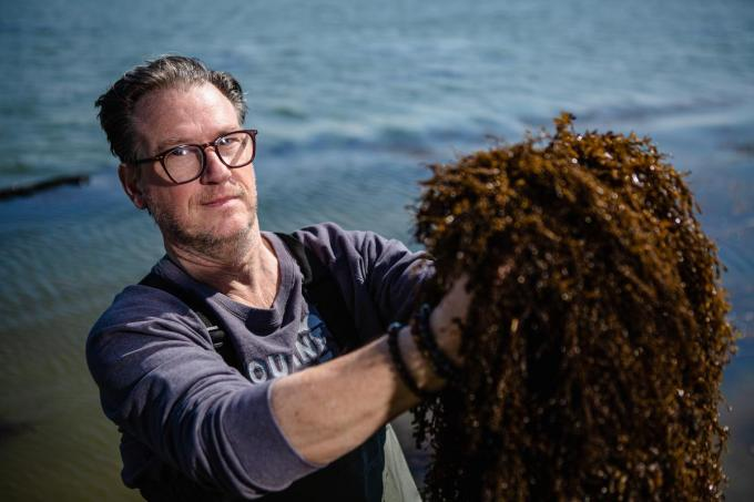 Seaweedchef Donald Deschagt.©  Davy Coghe