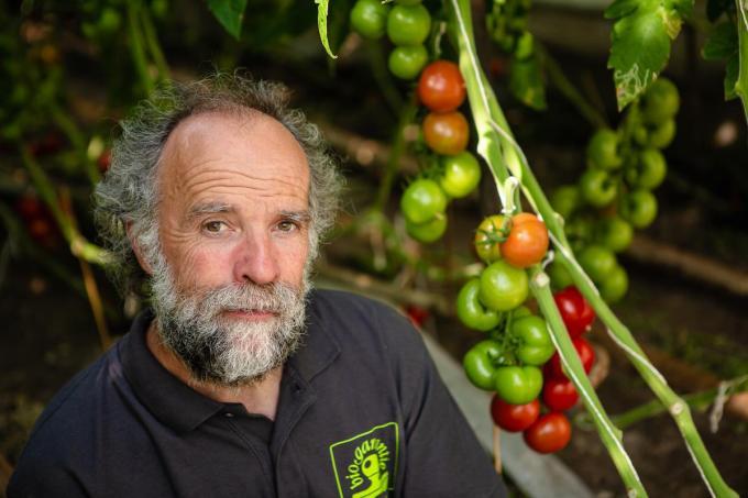 Philip Vermeulen kweekt biologische tomaten boordevol smaak.©Davy Coghe Davy Coghe