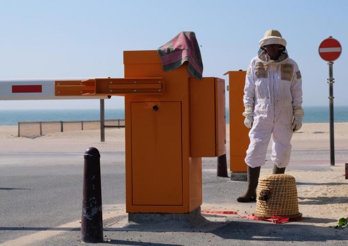 De bijen werden meegenomen door een imker.©José Tyteca