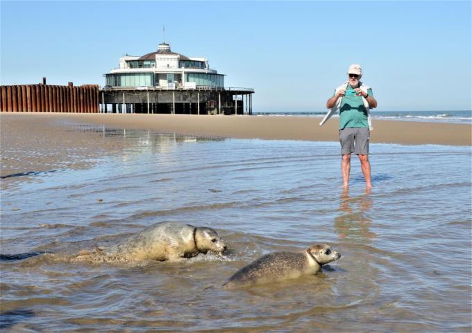 Zeehondjes Simba en Selkie zijn voldoende aangesterkt om terug naar huis te gaan.© WK