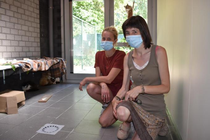 We zien vrijwilligers Zita en Myriam Lamaire in de ruimte van het dierenasiel waar de katten voorlopig opgevangen worden.© TOGH