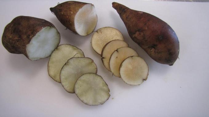 Wanneer je de Yacon snijdt oxideert die snel. In combinatie met appelsap, dat anti-oxidanten bevat, krijg je met het sap van de Yacon lekker yaconappelsap.
