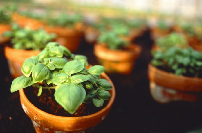 Planten bureau