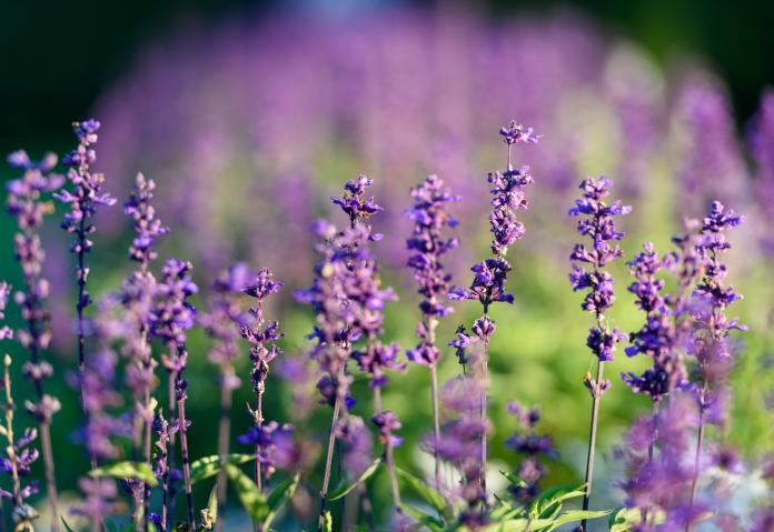 Langage Des Fleurs Quelle Est La Signification De Ces 11 Fleurs