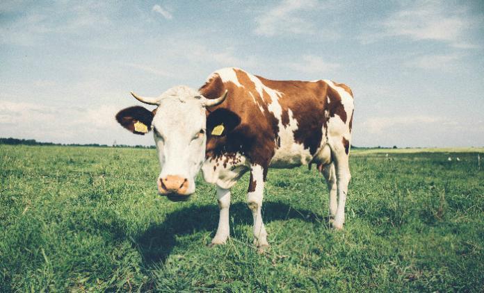 Manger et vivre avec une allergie aux protéines de lait de ...