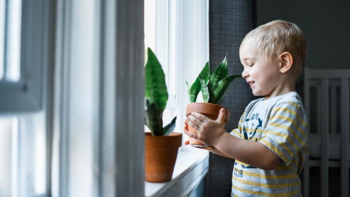 planten op de kinderkamer