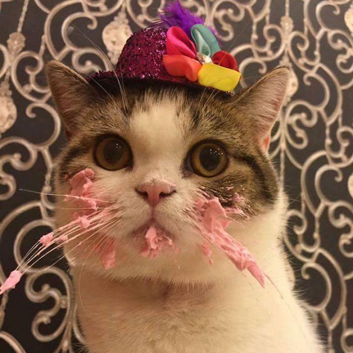 Deze Kat Is In De Wolken Met Zijn Verjaardagstaart