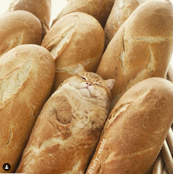 Koty Vezde