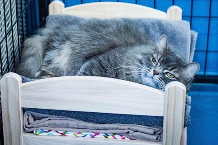 Slapen Op Grond : Ikea doneert poppenbedjes aan kattenasielen zodat hun gasten niet