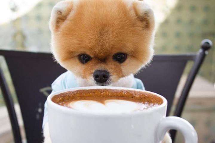 0aa19835ea2 6 chiens qui sont de vraies stars d Instagram
