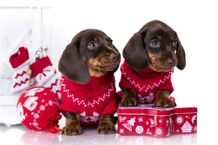 Kersttrui Kopen Hema.Cute Hema Verkoopt Een Kerst Onesie Voor Je Hond