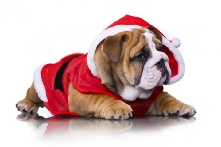 Kersttrui Mopshond.H M Verkoopt De Allermooiste Kersttruien Voor Je Hond