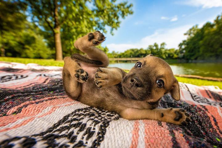 Mooiste hondenfoto's van 2018