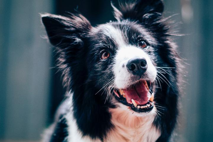 Hondennamen