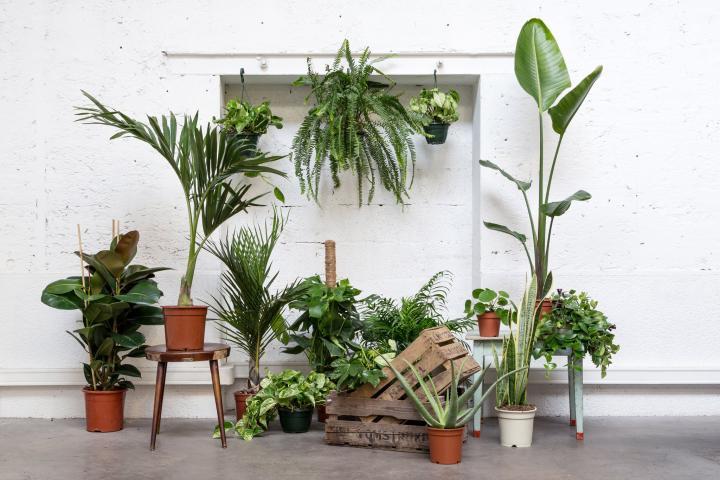 Plantes pour tous revient bruxelles pour une seconde dition for Plantes interieur sans entretien
