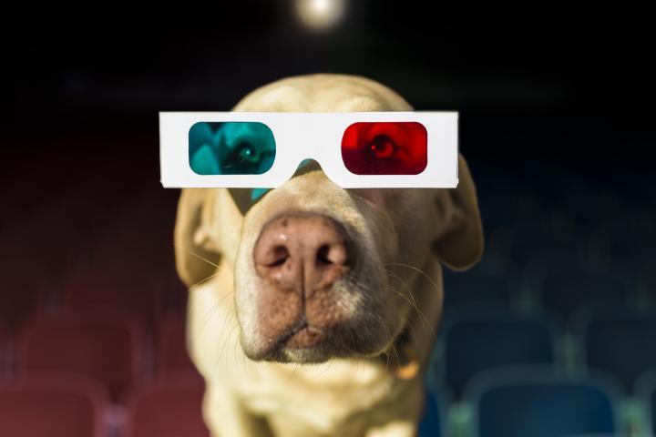 chiens cinéma