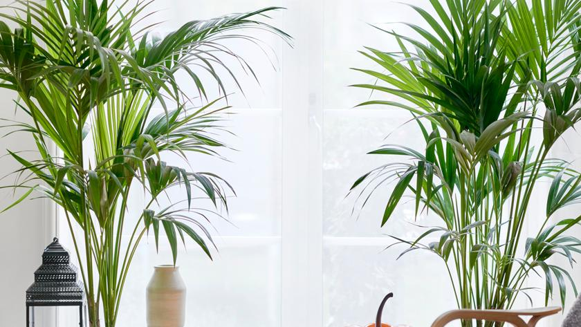 Kracht Planten Huis : Deze planten passen bij jouw sterrenbeeld libelle