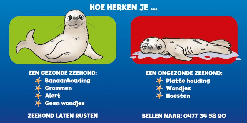 zeehond ziek of gezond?