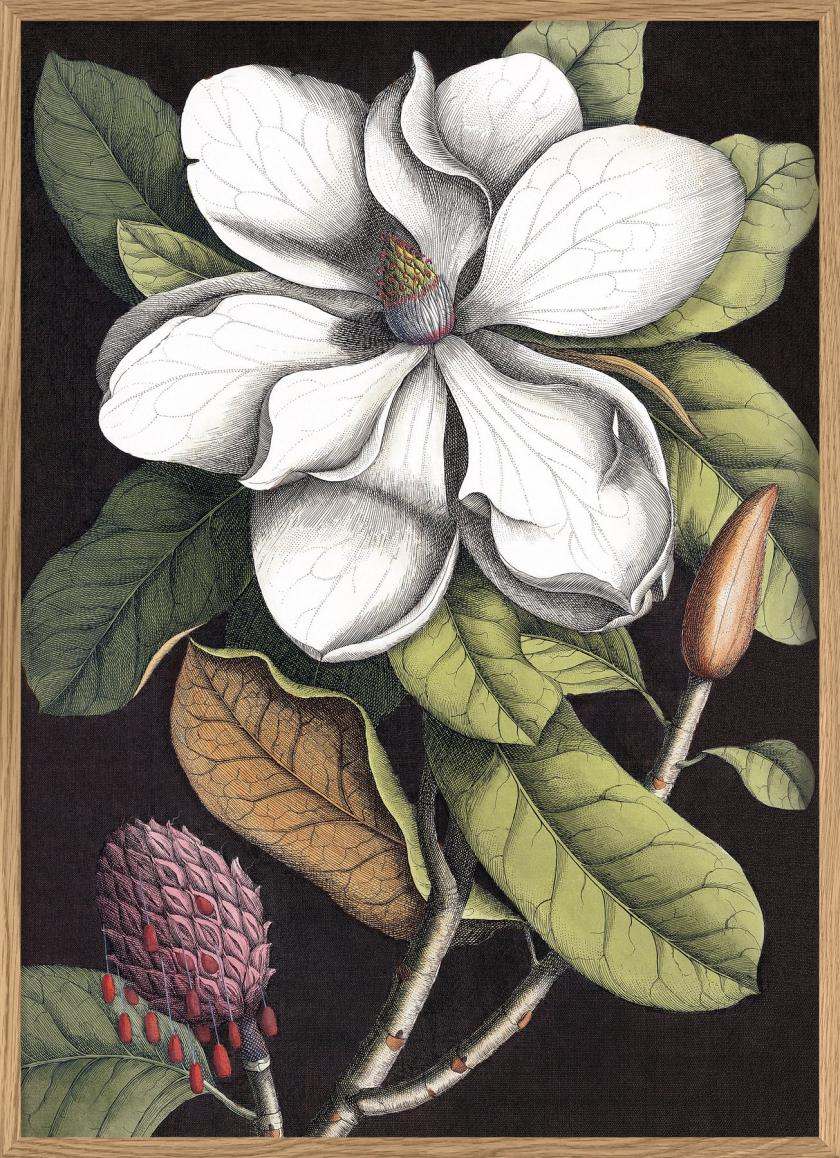 Blooming white magnolia - The Dybdahl Co