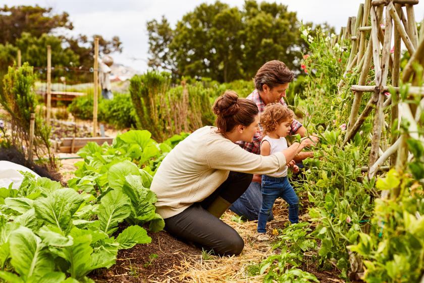 pluktuinen, csa boerderij, boerderij, groenten, fruit