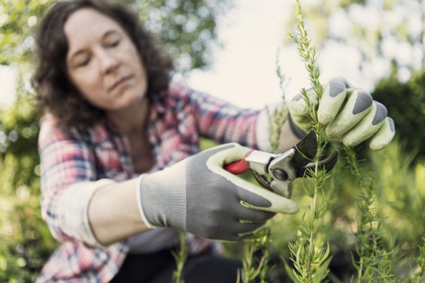 tuinieren basisset