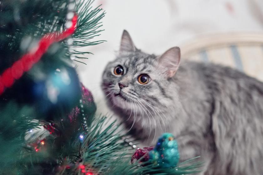 kat kerst