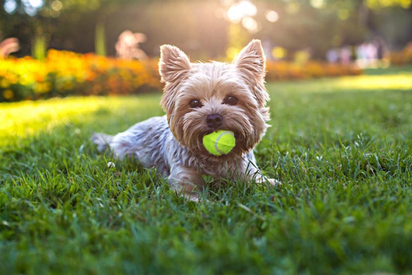 allergievriendelijke honden