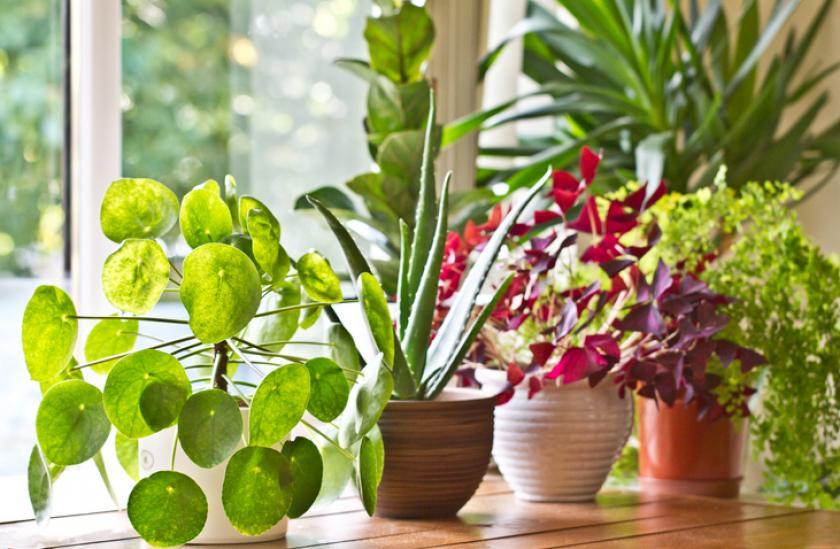 kamerplanten winter najaar